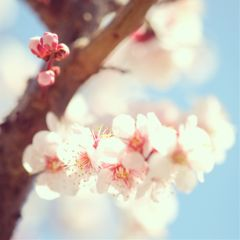 cute flower nature photography spring