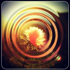 watereffect takenbyme photography flower
