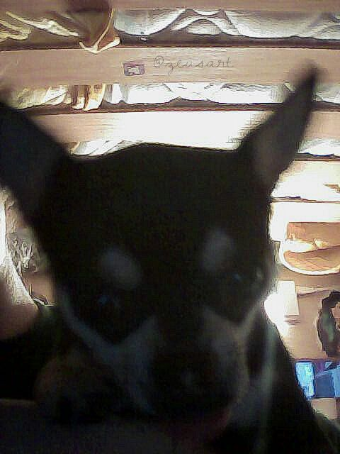 selfie mypet
