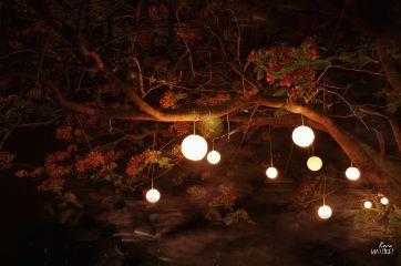 emotions tree night
