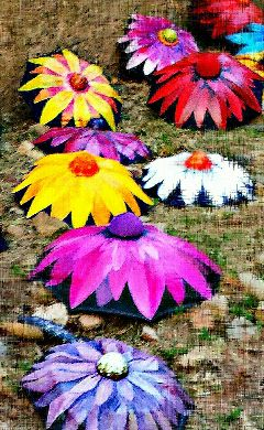 colorful umbrella flowers tempsdeflors