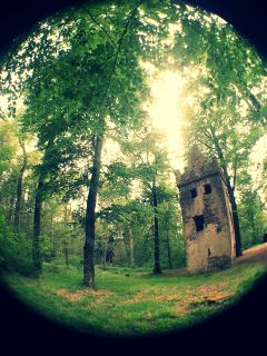 trees ruin nature fisheye forest