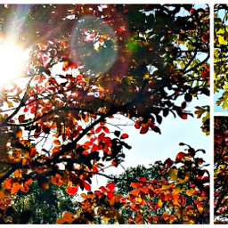 collage colorful hdr nature photography