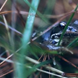 frog nature petsandanimals forest