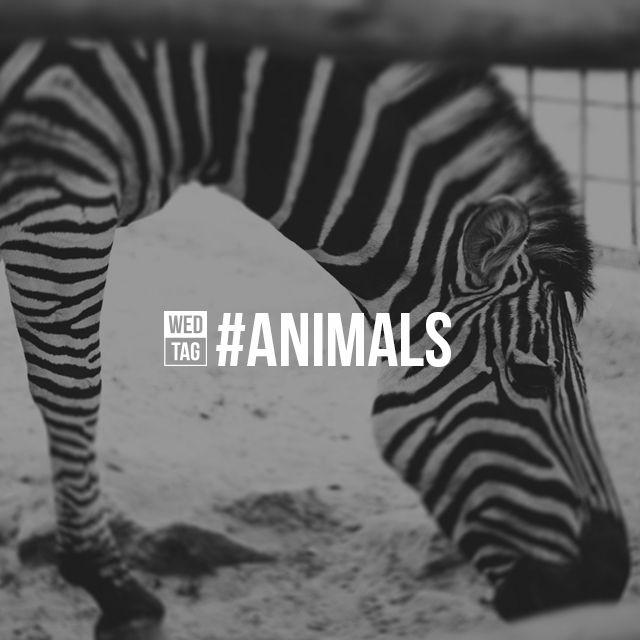 hash tag animals