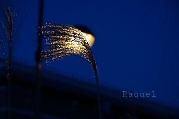 photography lamp