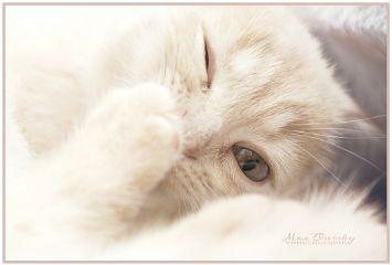 cat petsandanimals cute passion photography